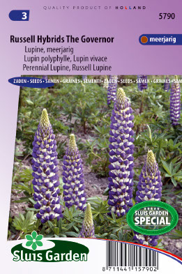 Image of Lupine Russel Hybrids The Governer